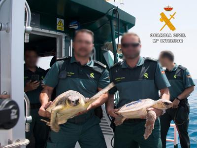 Noticia de Almería 24h: Kika y Monster, dos nuevas tortugas bobas ya nadan en el Cabo de Gata